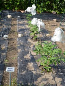 Bild von Scharfenberger Genetikgarten.