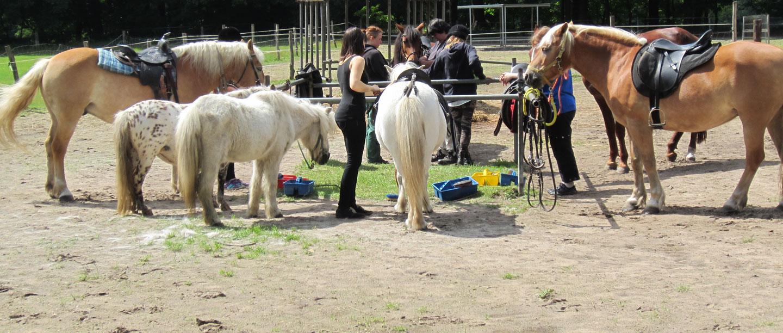 6 Scharfenberger Pferde stehen mit einigen Personen rum.