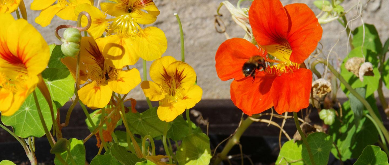 Bild mit Gelben und Roten Blumen.